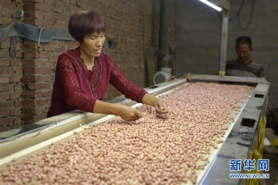 """农业产业结构,采取""""公司+基地+农户""""的经营模式,鼓励农民发展花生种植"""